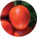 Tomatoes seeds - F-1 3001