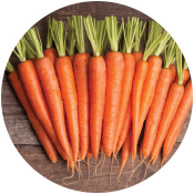carrot seeds suppliers