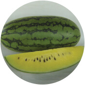 Watermelon seeds in gujarat